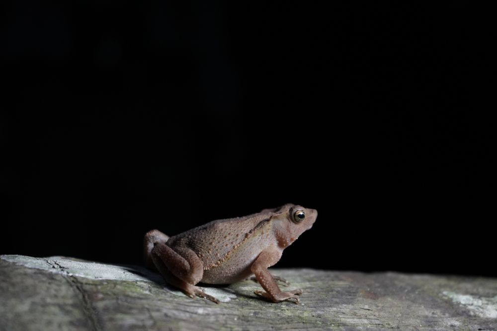 Endemic Frogs
