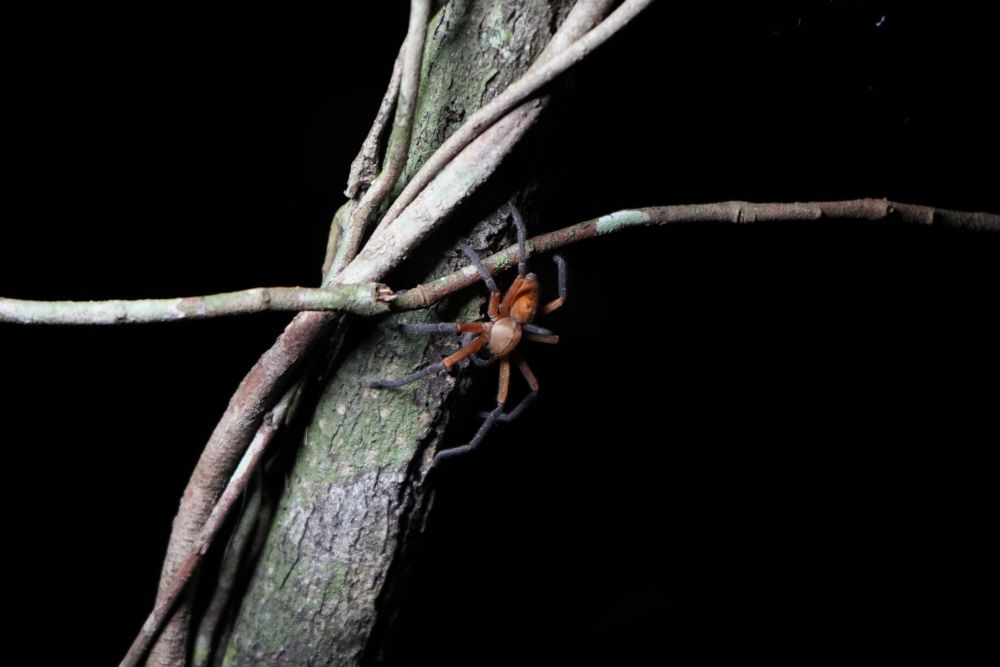 Amazon Nightly Wildlife