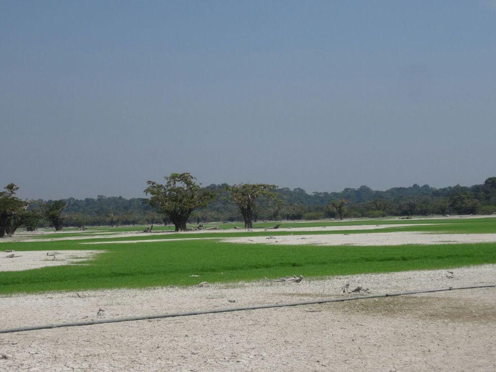 Amazon Beautiful Landscape