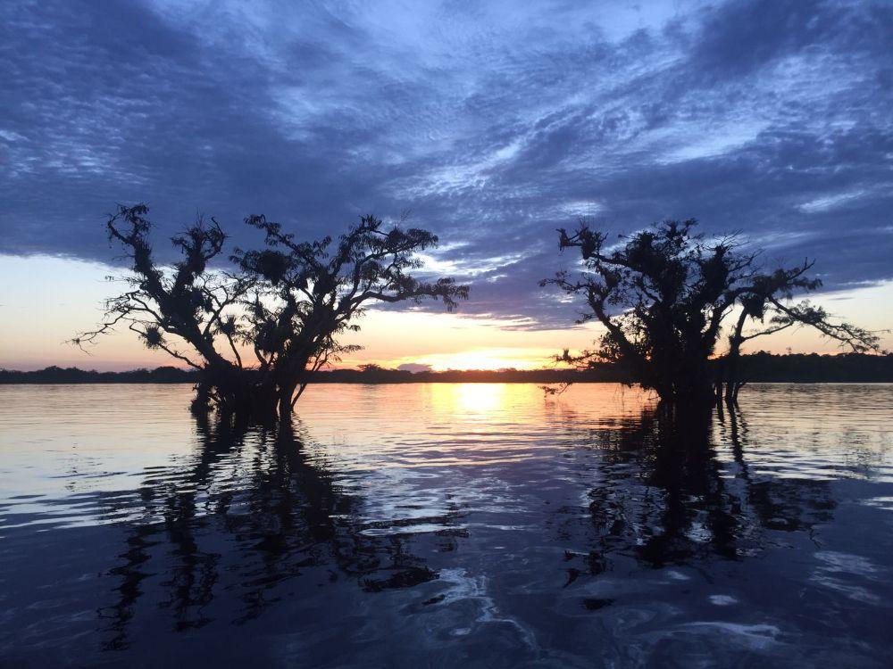 Amazon Dream Landscape