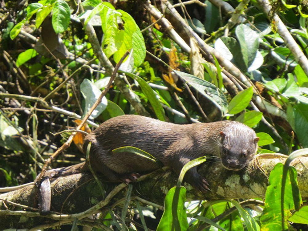Amazon beautiful animals