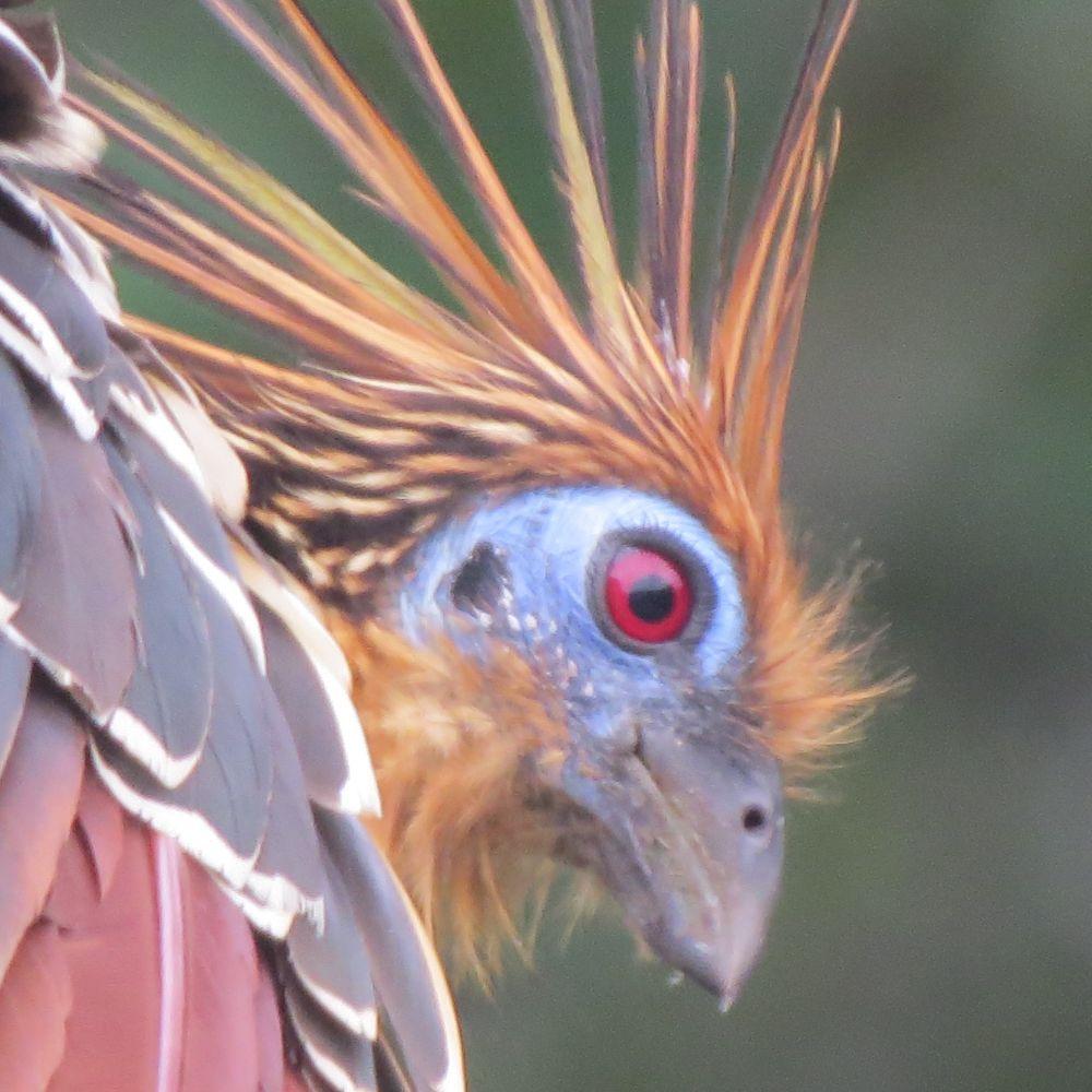 Cuyabeno Wildlife