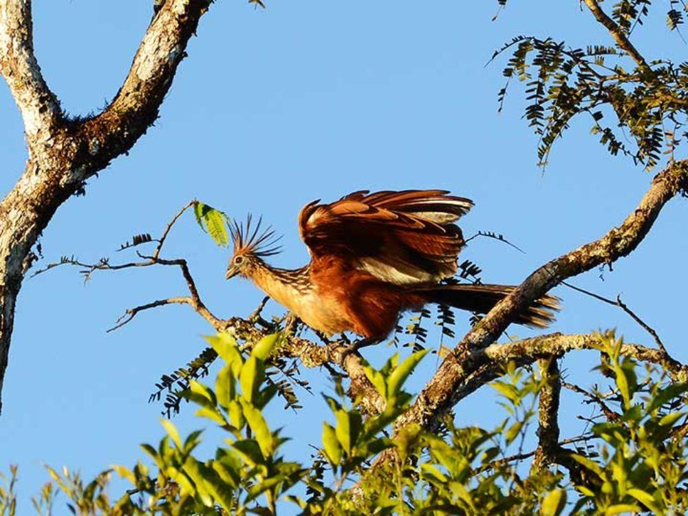 Exotic Amazon Birds