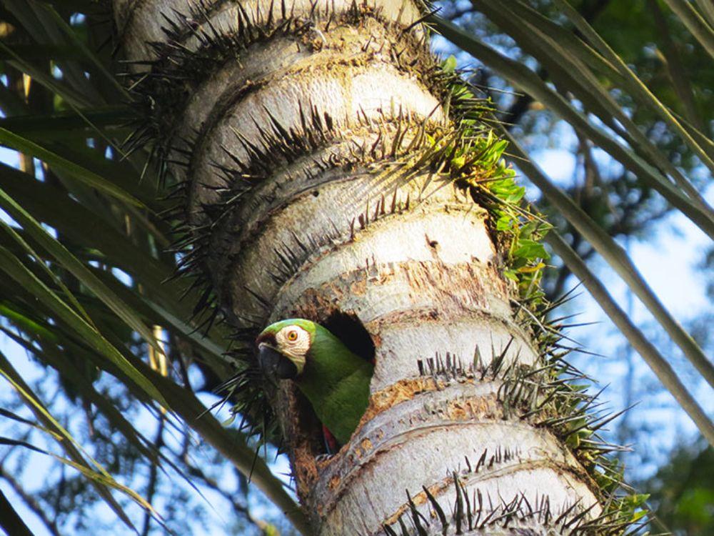 Amazon Birdwatching Parrots